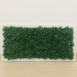 Tablou cu licheni - 40 x 80 cm