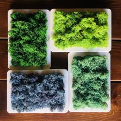 Tablou cu licheni in 4 culori