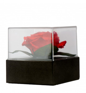Trandafir criogenat Eternity