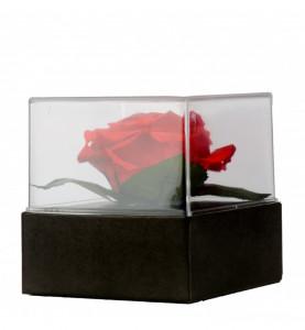 Trandafir etern criogenat Giftbox