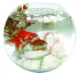 Staklena kugla za ribice XL