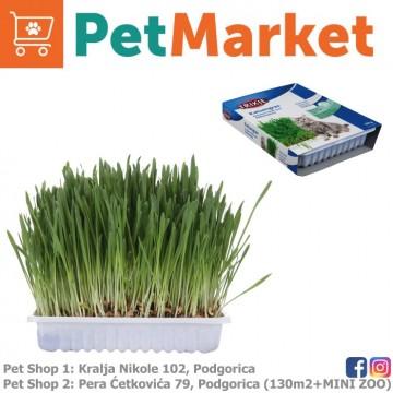 Trava za mačke TRIXIE