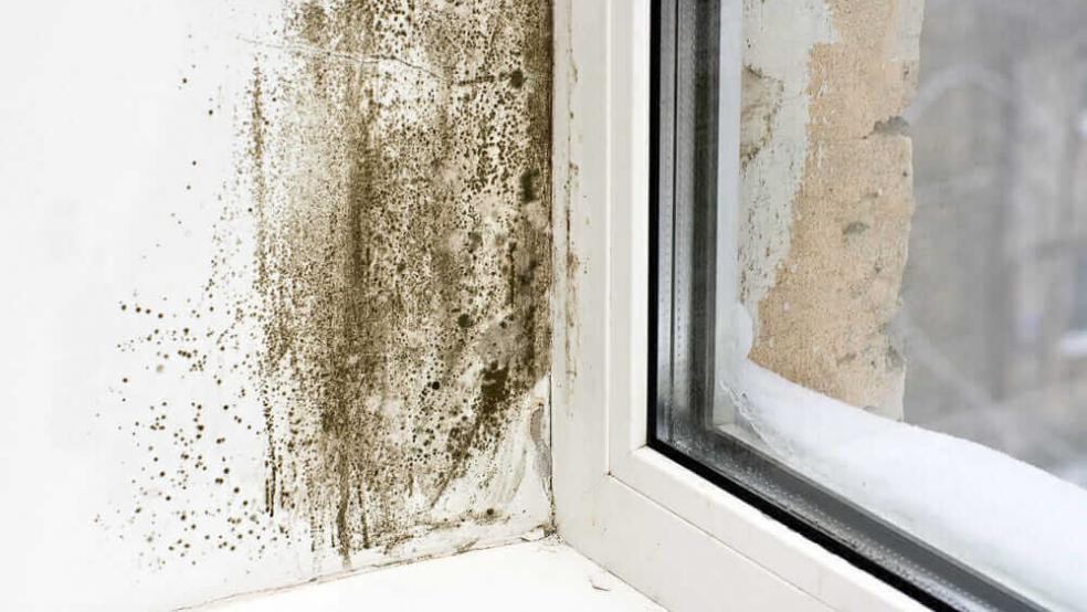 Cauzele aparitiei mucegaiului si cum scapam de el.