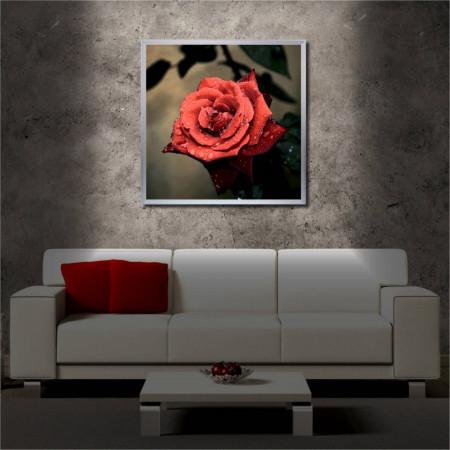 Tablou iluminat LED cu rama metalica Red Rose (60 x 60 cm)