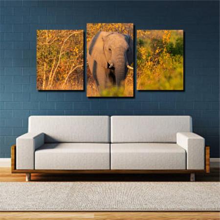Tablou canvas pe panza animals 10 - KM-CM3-ANM10
