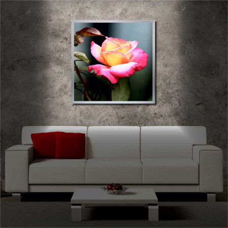 Tablou iluminat LED cu rama metalica Pink Rose (60 x 60 cm)