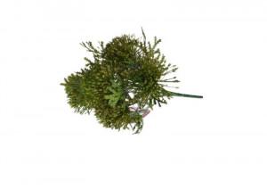 Buchet artificial, leucospermum verde