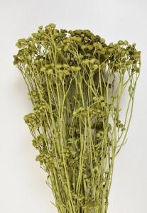 Buchet flori uscate, Tansy, verde