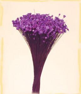 Flori uscate, Glixia, 100g, mov