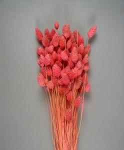 Flori uscate, Meiul Canarilor, Roz, 100g