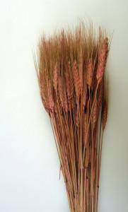 Flori uscate, Spice de grau lung, roz, 150 g