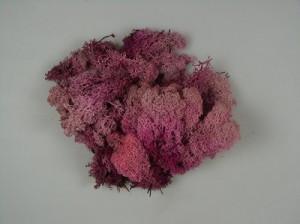 Muschi Islanda, roz, 250 gr