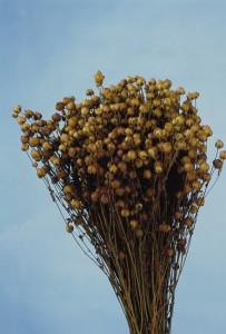 Buchet flori uscate, Len, natur, 100g