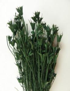Buchet flori uscate, Nigella, verde inchis, 100gr