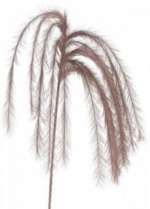 Creanga pene maro, 130 cm