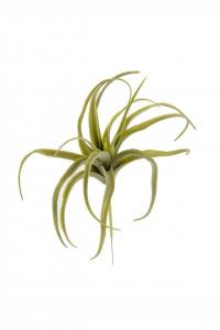 Floare artificiala, suculenta verde, 23x22 cm