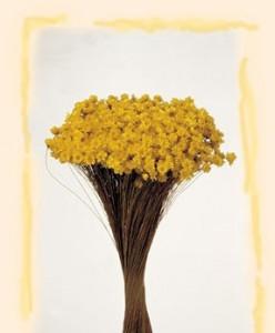 Flori uscate, Glixia, galben, 50g