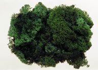 Muschi de Islanda, 250 gr, verde inchis