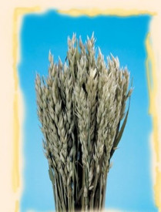 Buchet flori uscate, Zab, natur, 150gr