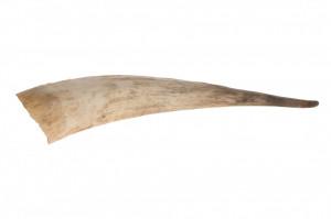 Coarne de taur decorative, lemn, 35-55 cm