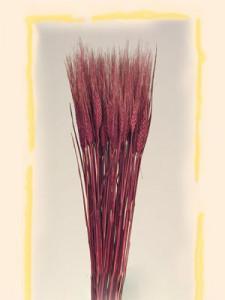 Flori uscate, Spice de grau, bordo, 150 g