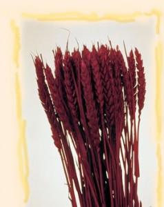 Flori uscate, Spice de grau scurt, bordo, 150 g