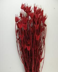 Buchet flori uscate, Nigella, rosu, 100gr