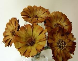 Buchet rozetta, 6-7 cm