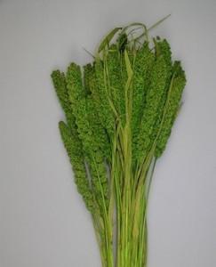 Flori uscate, Ciumiza, verde, 100 g