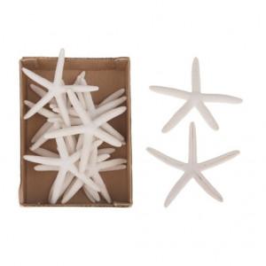 Set 14 stele albe de mare, 10-12 cm