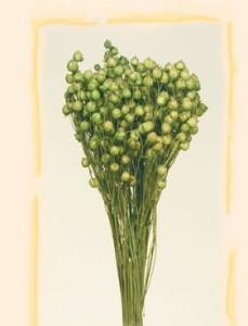 Buchet flori uscate, Len, verde deschis, 100g