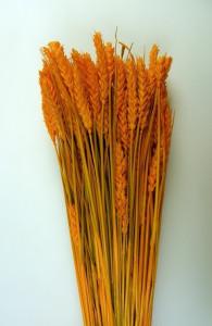 Flori uscate, Spice de grau scurt, portocaliu, 150 g