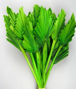 Frunze de palmier, verde