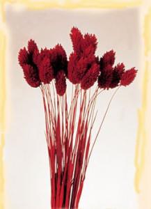 Buchet flori uscate, 100g, Rosu