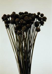 Buchet flori uscate, negre, 270 gr