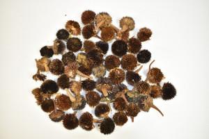 Flori uscate, Rudbeckia, 130 gr