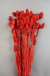 Flori uscate, Meiul Canarilor, rosu, 100g
