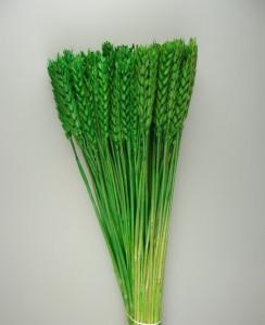 Flori uscate, Spice de grau scurt, verde, 150 g