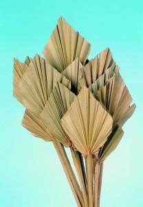 Mini frunze de palmier, natur