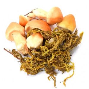 Set decoratiuni de toamna, 6 ciuperci, 5 cm