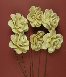 Buchet flori, Akacia, natur, 6 cm