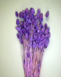 Flori uscate, Meiul Canarilor, lila, 100g