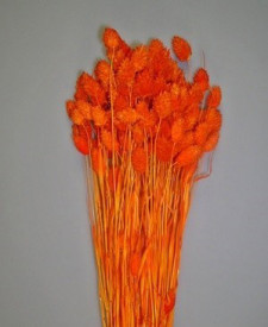 Flori uscate, Meiul Canarilor, portocaliu, 100g