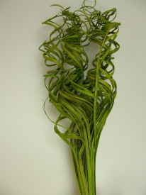 Curly Ting Ting, verde, 45 cm
