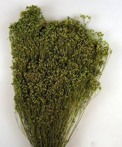 Flori uscate, Broom Bloom, verde, 100 g