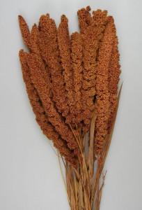 Flori uscate, Ciumiza, maro, 100 g
