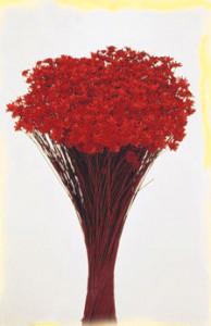 Flori uscate, Glixia, 50g, rosu