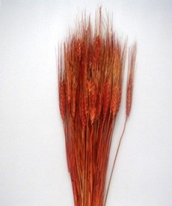 Flori uscate, Spice de grau lung, maro, 150 g
