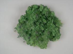 Muschi Islanda, verde, 250 gr