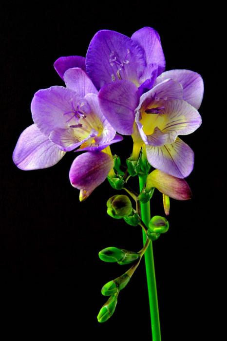 Sapun lichid de maini Om She Aromatherapy Violet & Freesia Hand Wash, 500 ml